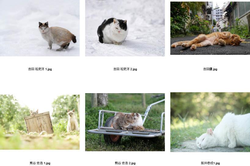 池袋「ギャラリー路草」にて2タイトルの猫写真展を開催します。_c0194541_01055898.jpg