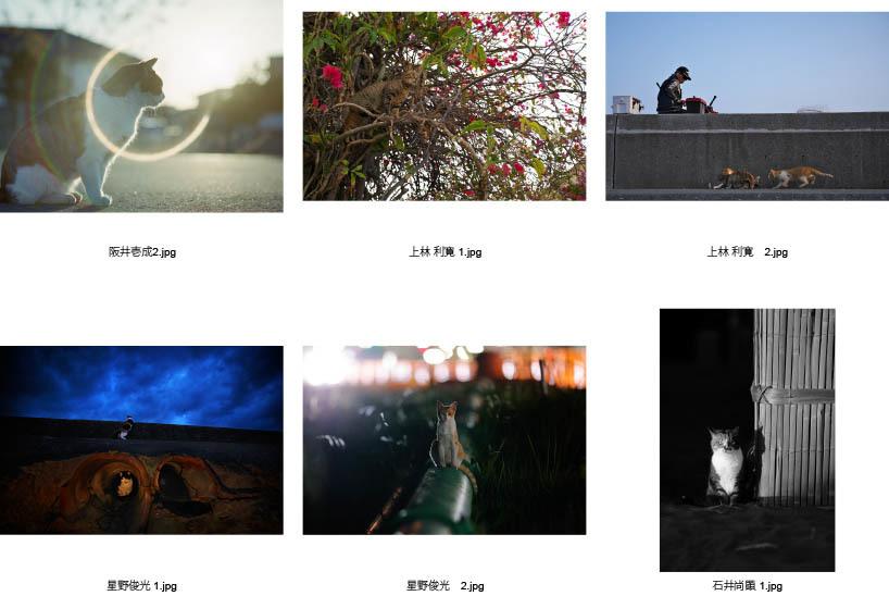 池袋「ギャラリー路草」にて2タイトルの猫写真展を開催します。_c0194541_01061575.jpg