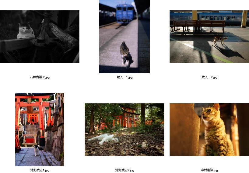池袋「ギャラリー路草」にて2タイトルの猫写真展を開催します。_c0194541_01062279.jpg