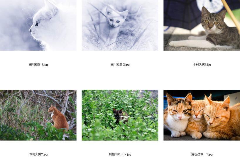 池袋「ギャラリー路草」にて2タイトルの猫写真展を開催します。_c0194541_01062872.jpg