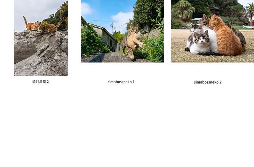 池袋「ギャラリー路草」にて2タイトルの猫写真展を開催します。_c0194541_01230643.jpg