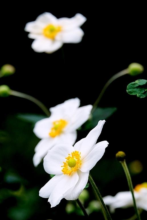 植物から作られた庭を歩く_b0314043_18373719.jpg