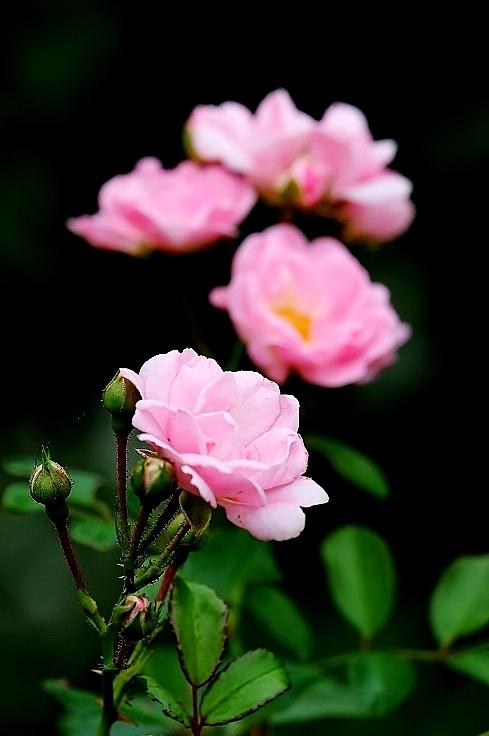 植物から作られた庭を歩く_b0314043_18374457.jpg