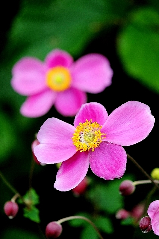植物から作られた庭を歩く_b0314043_18375646.jpg