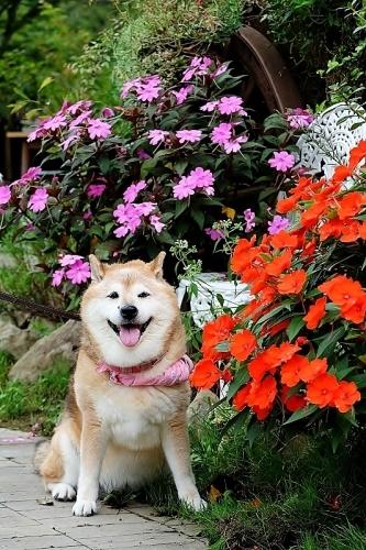 植物から作られた庭を歩く_b0314043_18382963.jpg