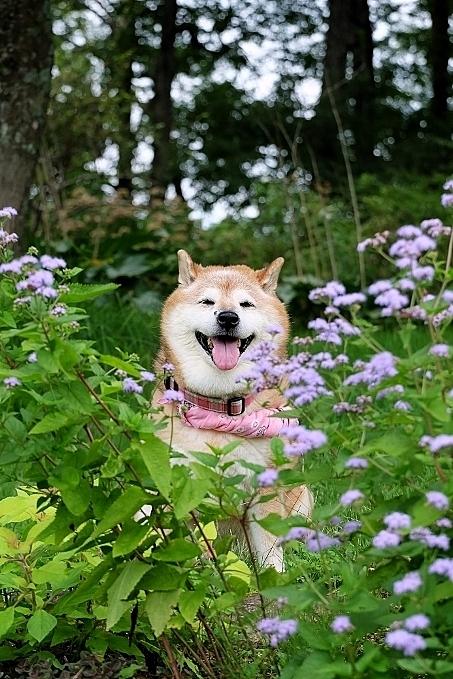 植物から作られた庭を歩く_b0314043_18383821.jpg