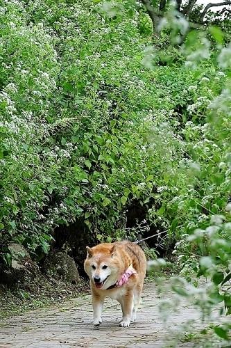 植物から作られた庭を歩く_b0314043_18390811.jpg