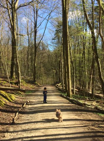 TAROと森を歩く 3_e0076052_08062168.png