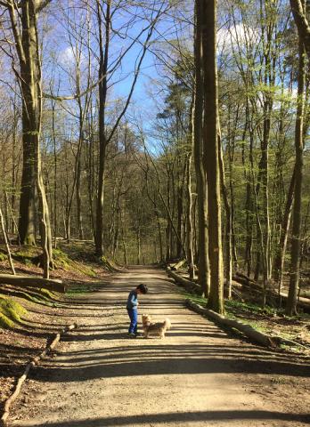 TAROと森を歩く 3_e0076052_08063748.png