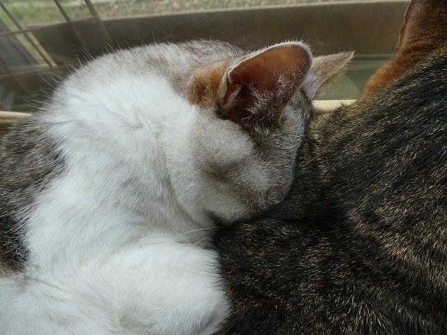 猫団子_e0411854_13570418.jpg