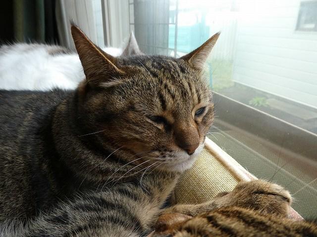 猫団子_e0411854_13570472.jpg