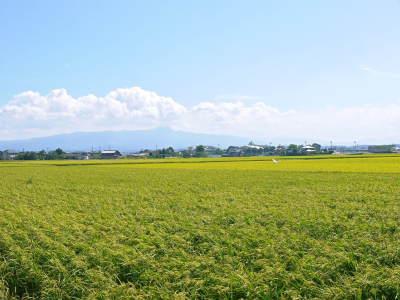 """砂田のこだわりれんげ米 順調に色づき始め頭を垂れてきています!今年は無農薬ではなく""""減農薬栽培""""です!_a0254656_16392002.jpg"""