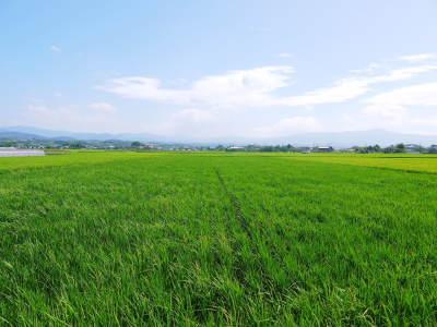 """砂田のこだわりれんげ米 順調に色づき始め頭を垂れてきています!今年は無農薬ではなく""""減農薬栽培""""です!_a0254656_18093953.jpg"""