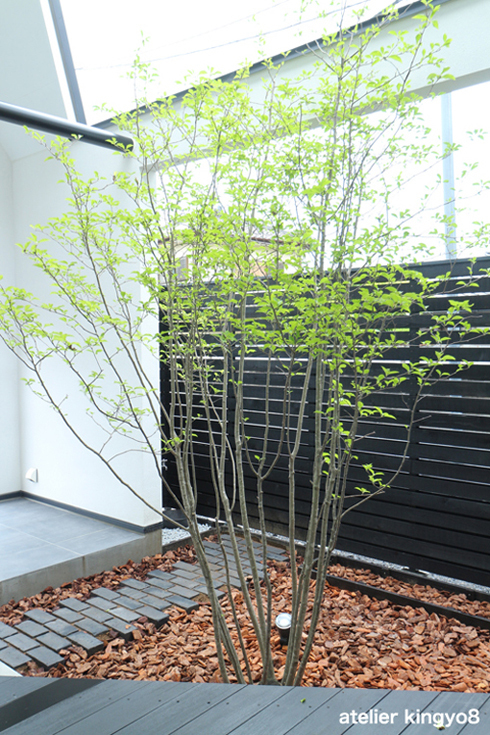 中庭のデザイン_b0132663_11360860.jpg
