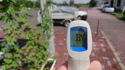 緑のカーテン(ゴーヤ)栽培実験R2.9.17_d0338682_15273615.jpg