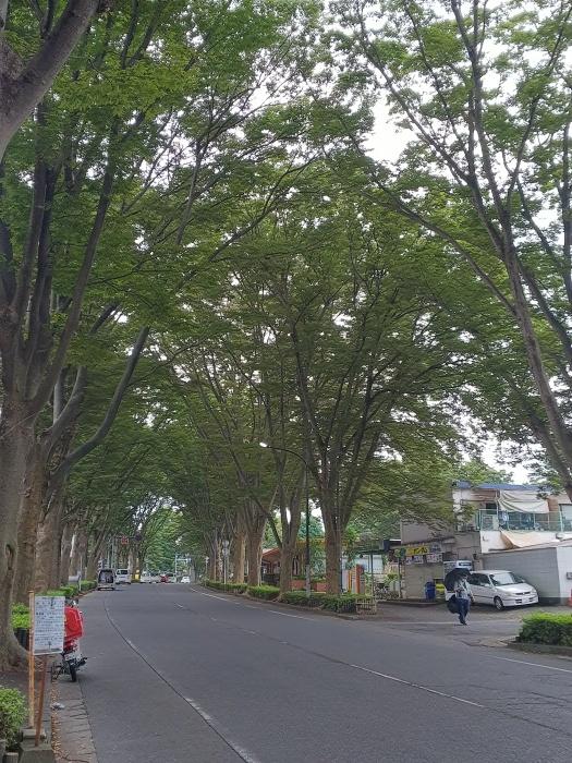松戸市の隅っこでウロウロする_c0360684_22145036.jpg