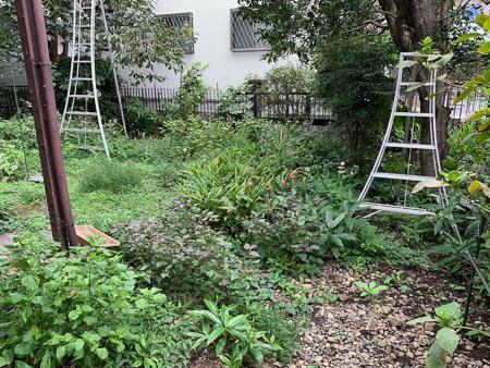 9月の庭 2020_f0239100_00310721.jpg