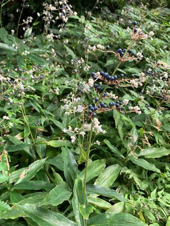 9月の庭 2020_f0239100_00564981.jpg