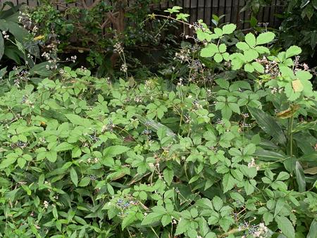 9月の庭 2020_f0239100_00580969.jpg