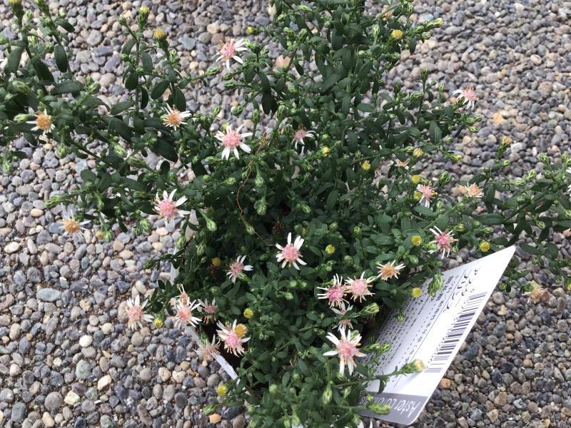 買った鉢と買った植物_c0404712_09083643.jpg