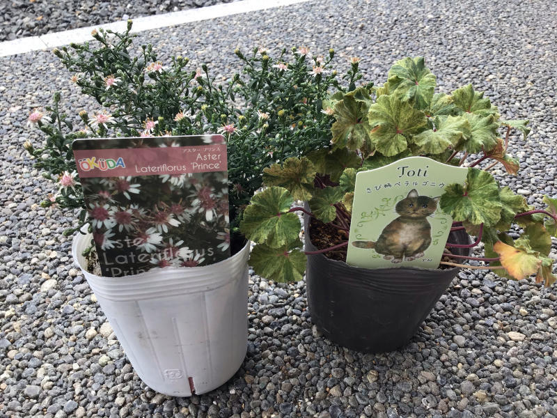 買った鉢と買った植物_c0404712_09083753.jpg