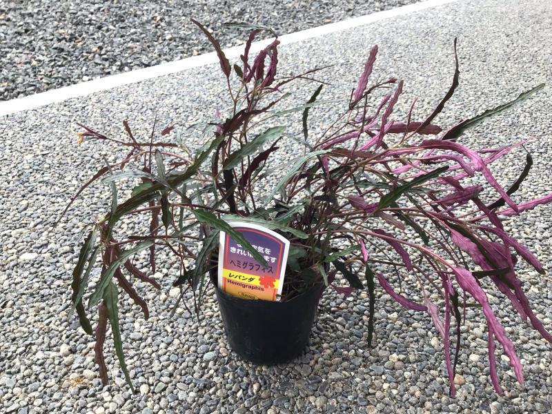買った鉢と買った植物_c0404712_09084917.jpg