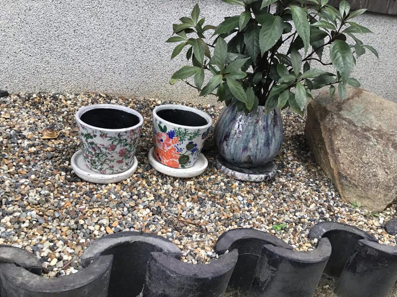 買った鉢と買った植物_c0404712_09085162.jpg