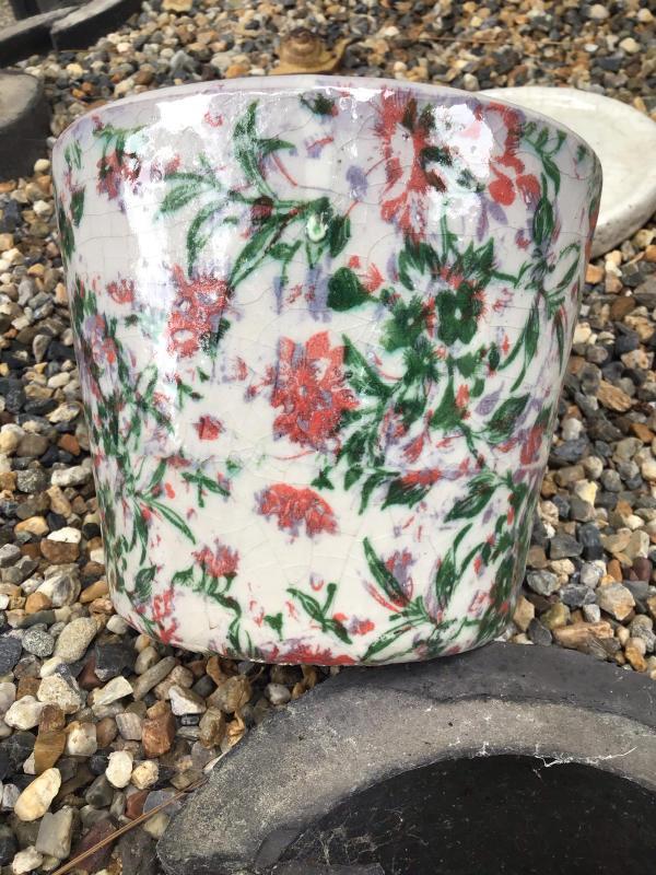 買った鉢と買った植物_c0404712_09085221.jpg