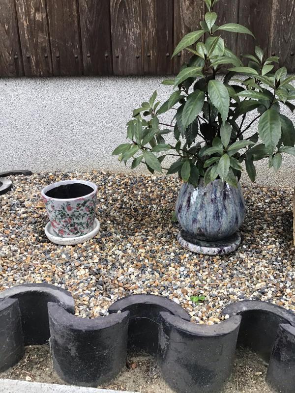 買った鉢と買った植物_c0404712_09085329.jpg