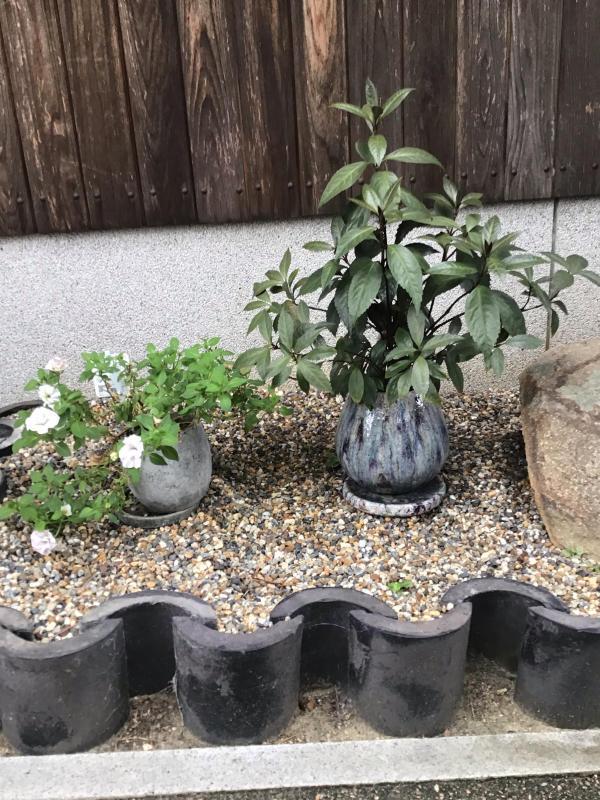 買った鉢と買った植物_c0404712_09090317.jpg