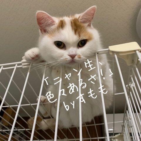 ひなと_b0340621_15023607.jpg