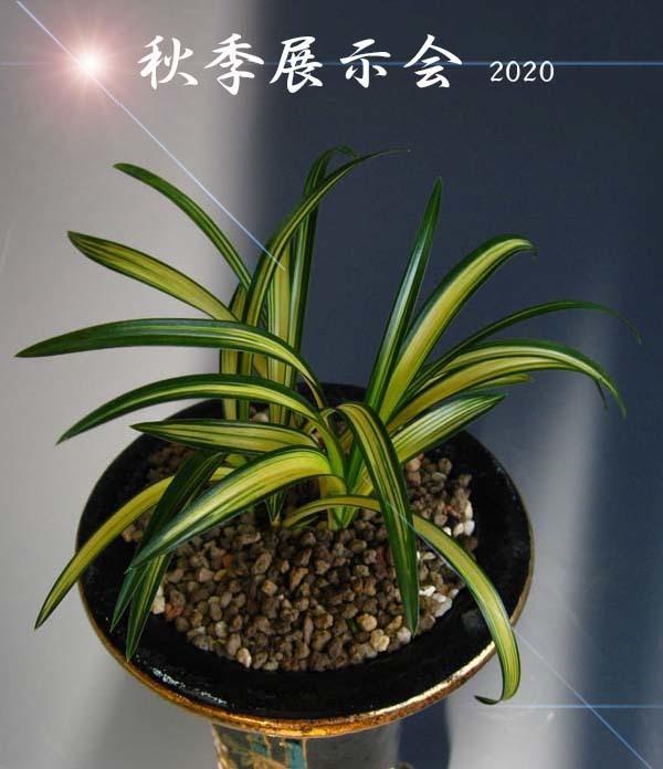 秋季展示会2020               No.641_d0103457_15400217.jpg