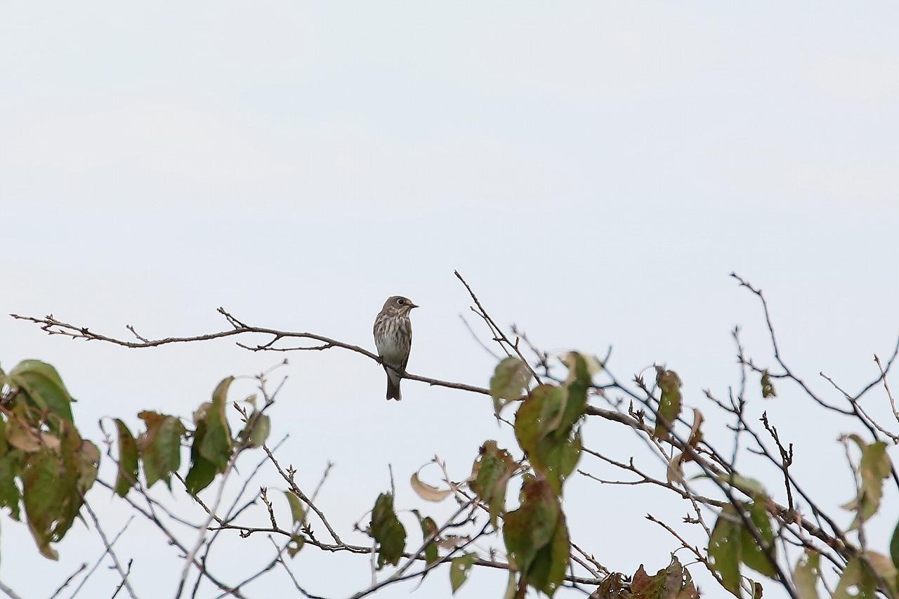 鷹の渡り_f0296999_18191897.jpg