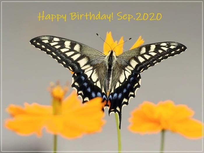 9月生まれの皆様へ バースデーカードを エゾビタキ・コサメビタキ・曼殊沙華・キアゲハ 2020/9/19_d0129921_17300412.jpg