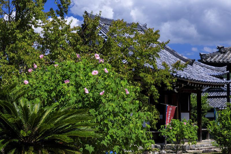 初秋の花咲く橘寺_f0155048_23502488.jpg