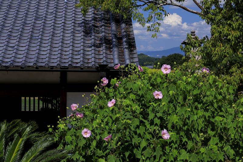 初秋の花咲く橘寺_f0155048_2350286.jpg