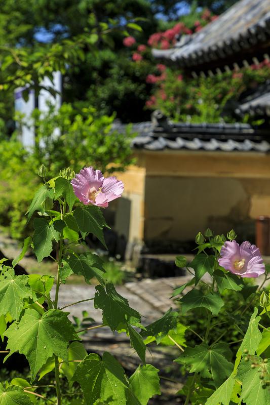 初秋の花咲く橘寺_f0155048_23504293.jpg