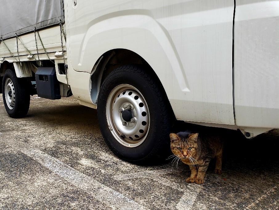 ある外猫の独白3_c0193077_13432111.jpg