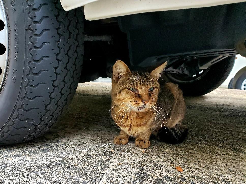ある外猫の独白3_c0193077_13432150.jpg