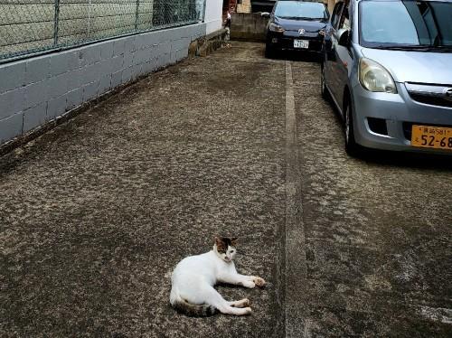 ある外猫の独白3_c0193077_13432163.jpg