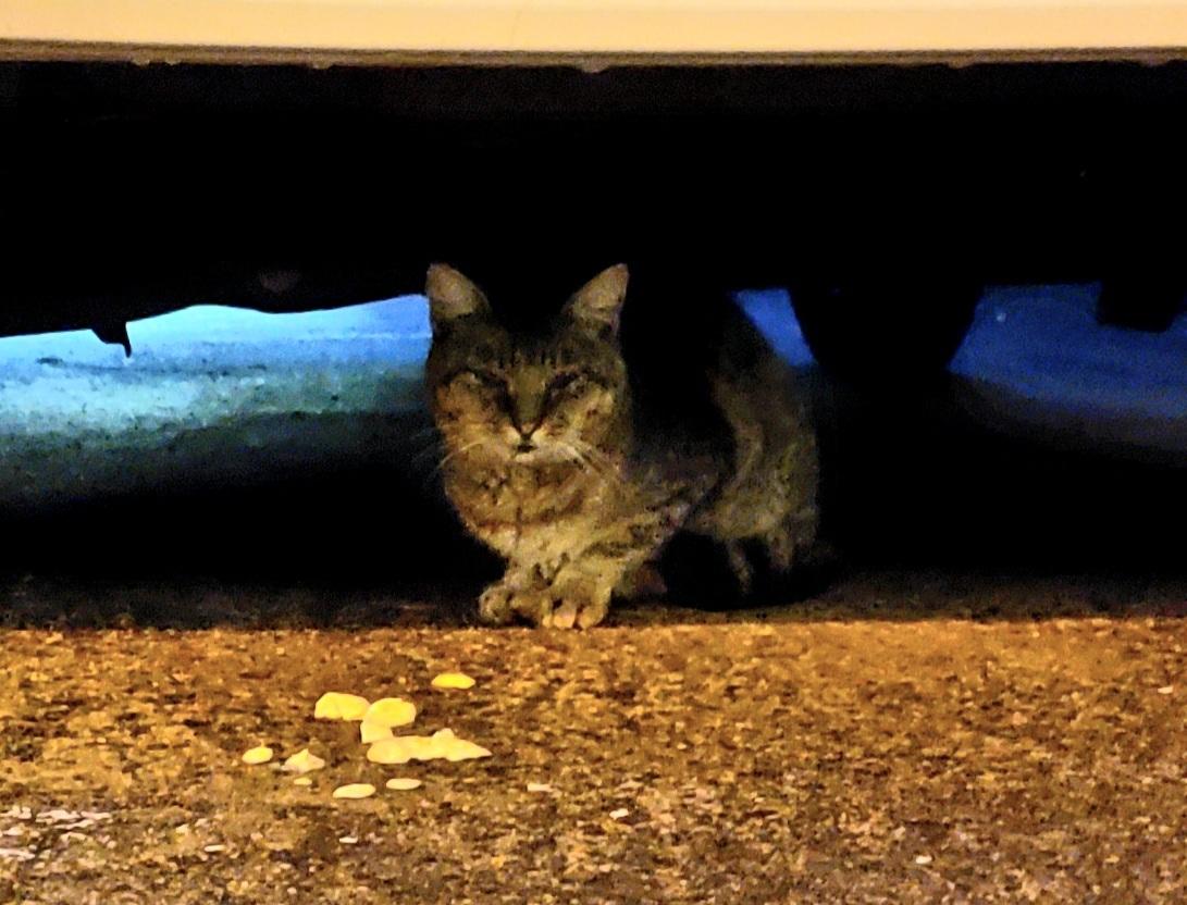ある外猫の独白3_c0193077_13432237.jpg