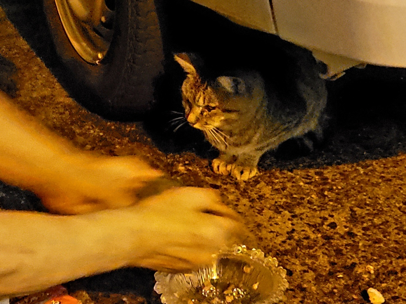 ある外猫の独白3_c0193077_13432260.jpg