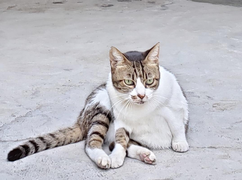 ある外猫の独白3_c0193077_13433439.jpg