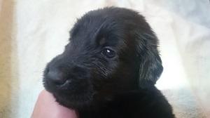 犬は大らかに育てよう!2の⑥_b0084194_17105111.jpg