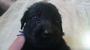 犬は大らかに育てよう!2の⑥_b0084194_17110393.jpg