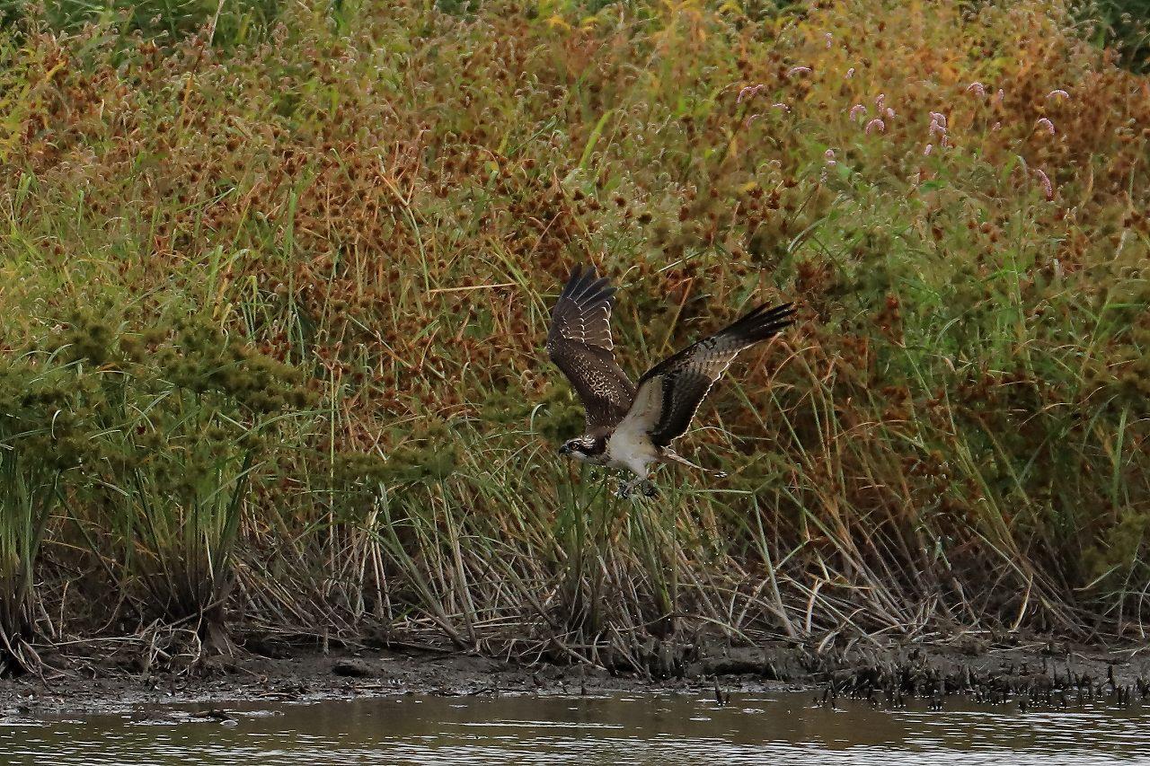 湿原にて_f0296999_17313604.jpg