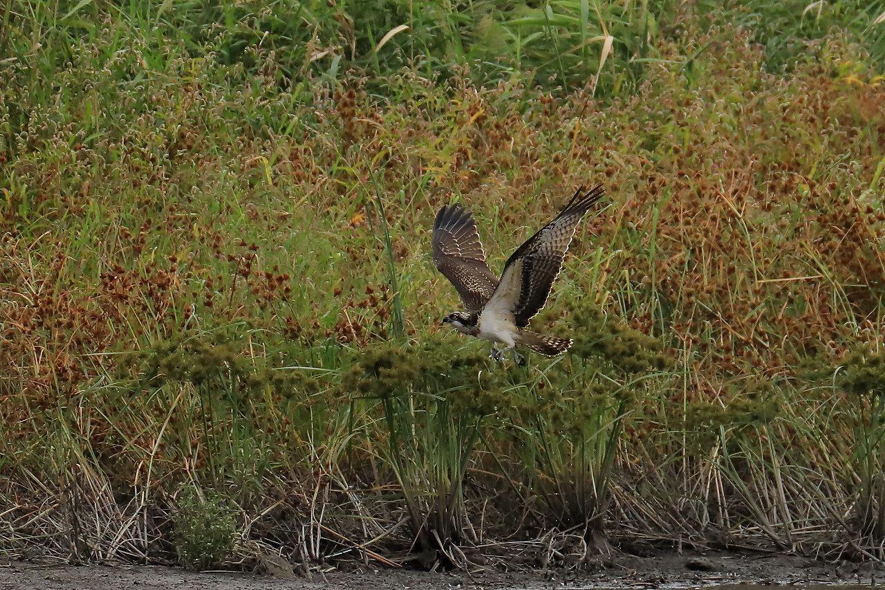 湿原にて_f0296999_17314971.jpg
