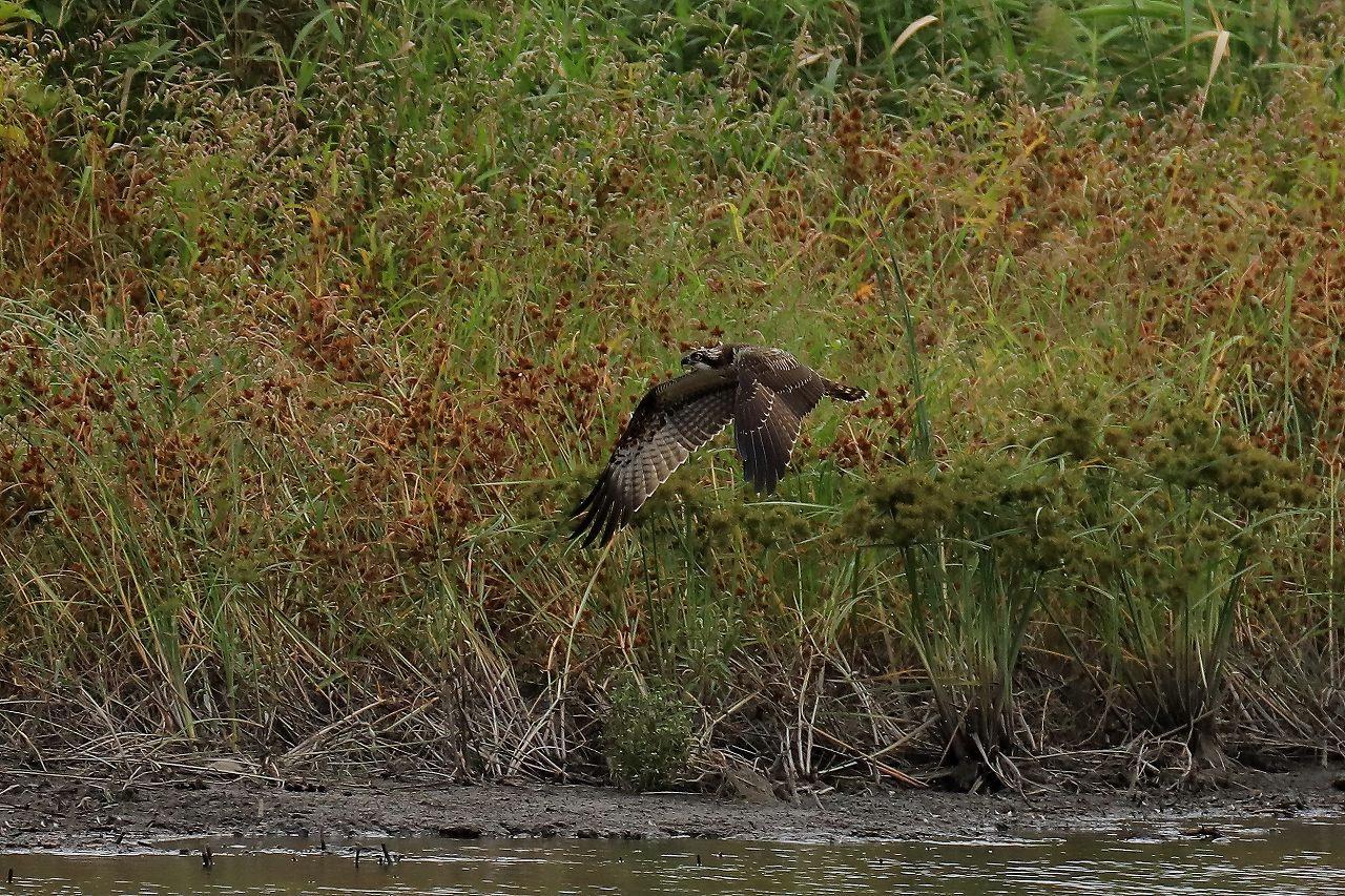 湿原にて_f0296999_17315509.jpg