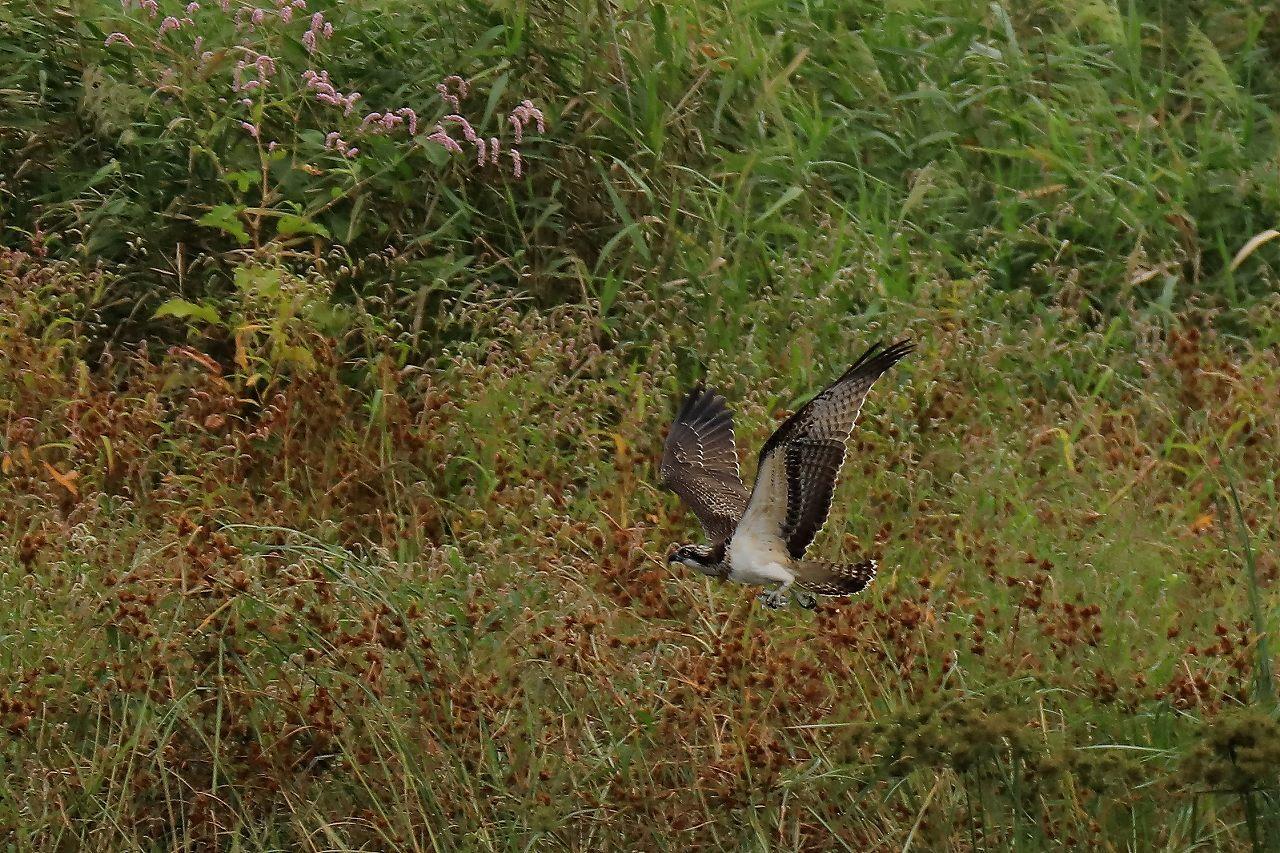 湿原にて_f0296999_17320091.jpg