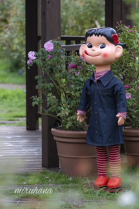 花菜ローズとペコちゃん。_c0037519_00291238.jpg